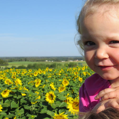 fb sunflower add